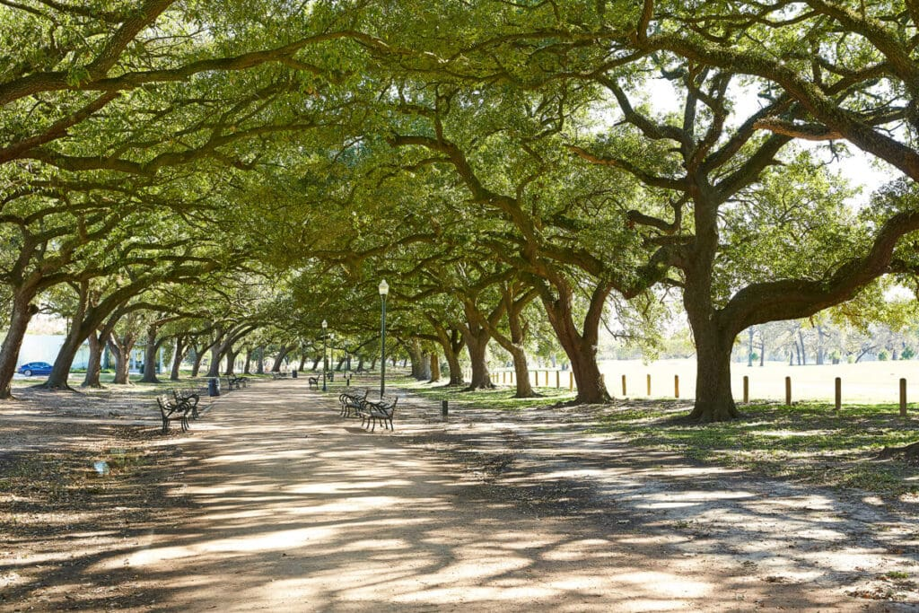 A dirt path with benches on either side under a canopy of oak trees