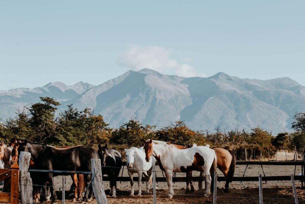A group of horses look at the camera in a corral in front of the mountains in Patagonia