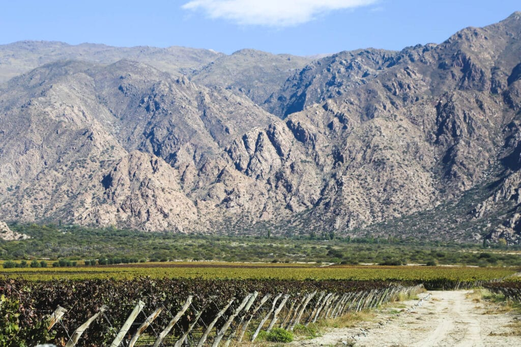 A vineyard in front of the mountains