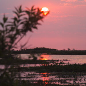 A Practical Guide to the Esteros del Ibera Wetlands in Argentina