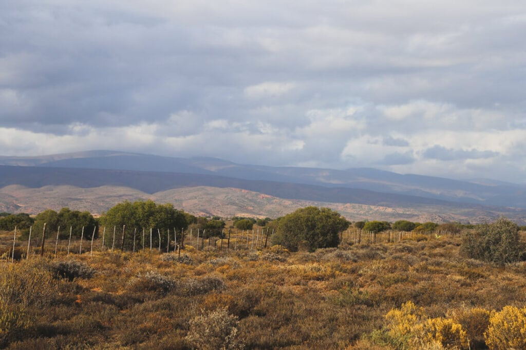 Fenced in pasture in the Little Karoo desert in South Africa