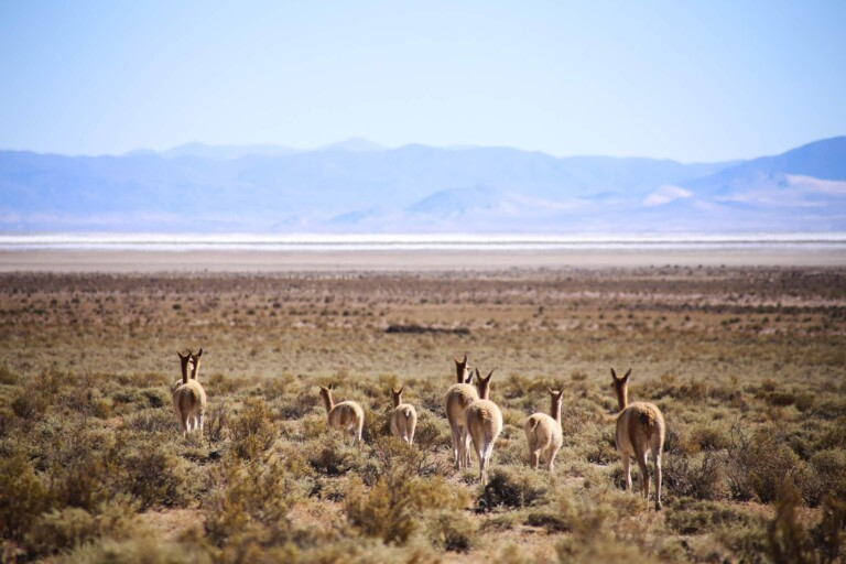 Salta & Jujuy: A 9 Day Northwest Argentina Road Trip Itinerary
