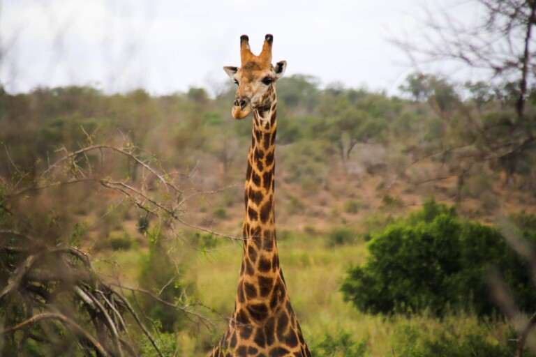 Why You Should do a Self Drive Safari in South Africa
