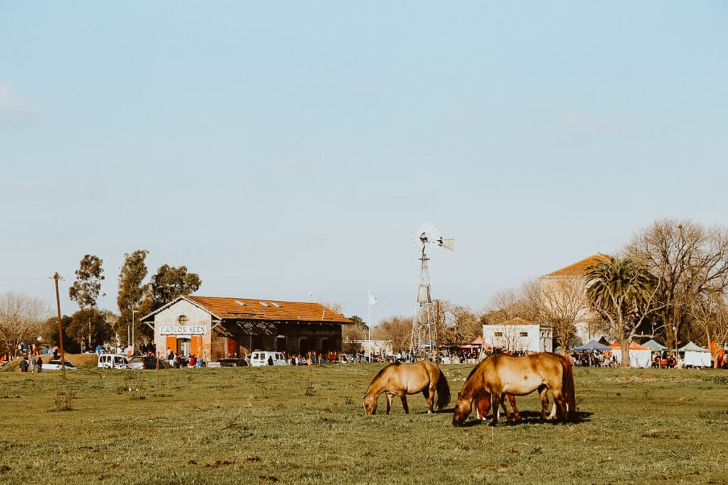 Horses graze in a field by a historic train station