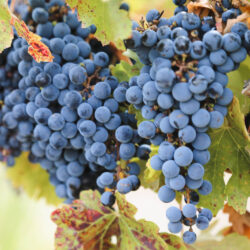 The Best Wineries in Mendoza: A Guide to Wine Tasting in Mendoza