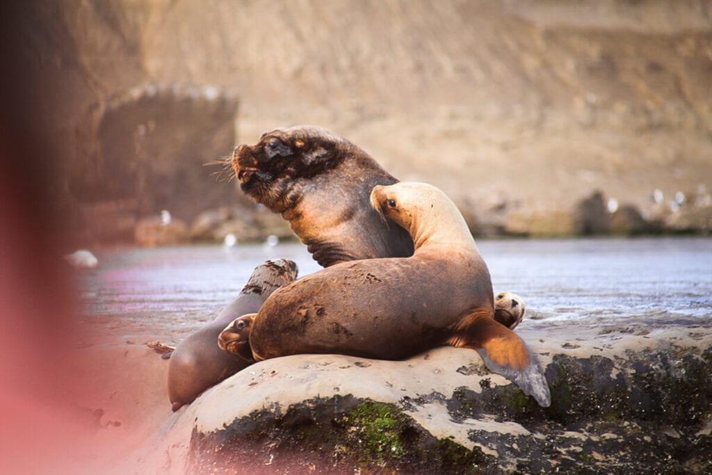 Three sea lions on a rock in the middle of the water