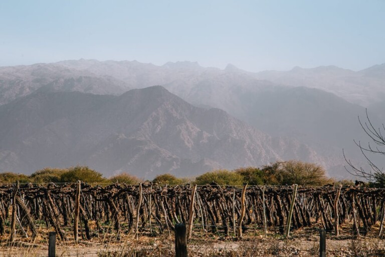 The 12 Best Wineries in Cafayate