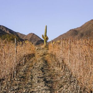 6 Wineries in Cachi to Visit