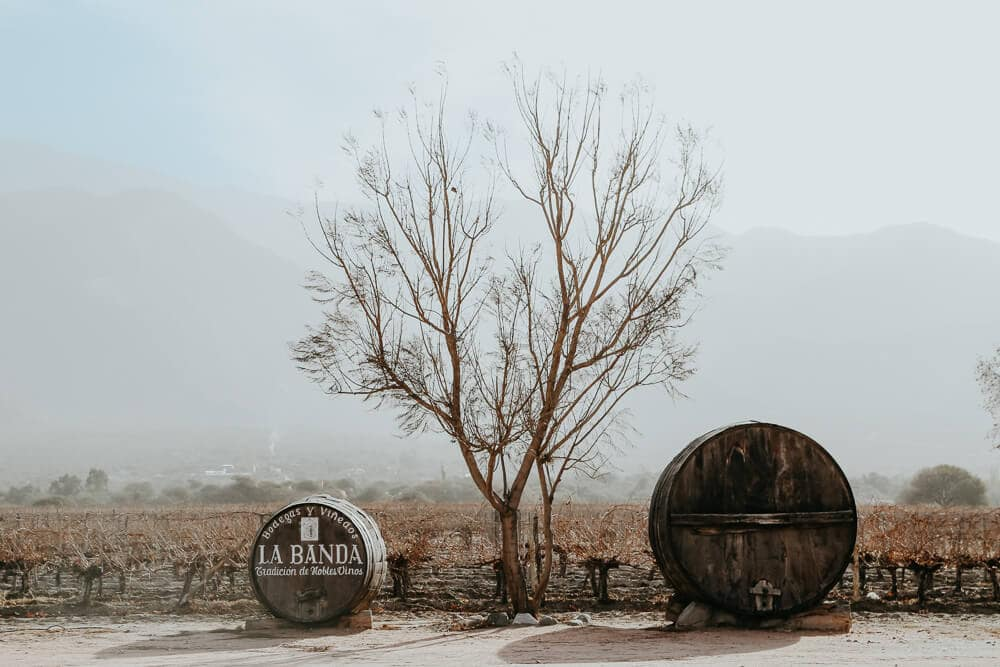 Two enormous wine barrels in front of a vineyard